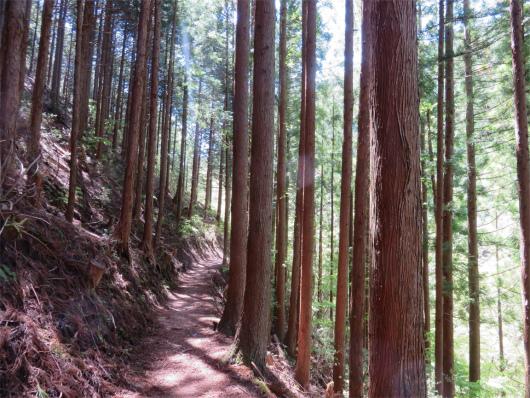 みたらい渓谷樹林帯