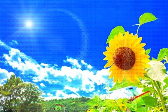 夏・太陽・紫外線・虫・花