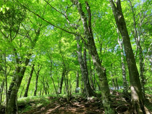 堂平の美林広がる