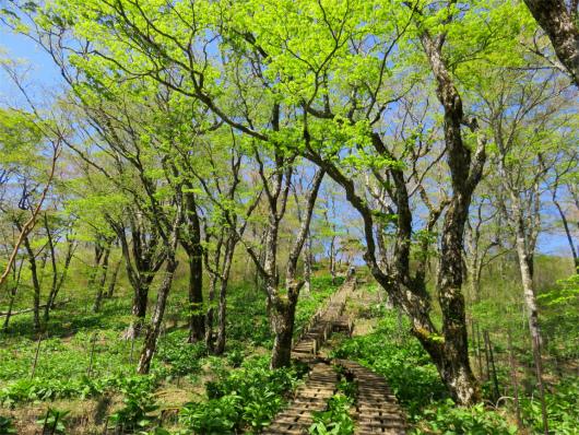 雰囲気が良い木道