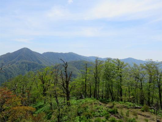 丹沢主脈縦走路の山並み