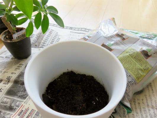 観葉植物用の培養土を鉢に入れる