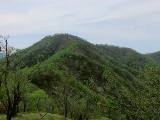 振り返っての檜洞丸の山頂