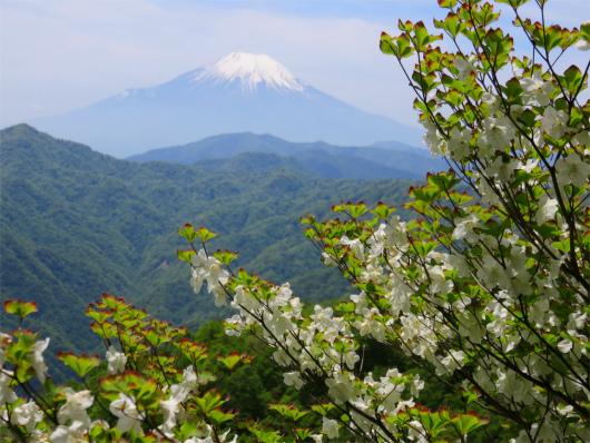 白い花と富士山