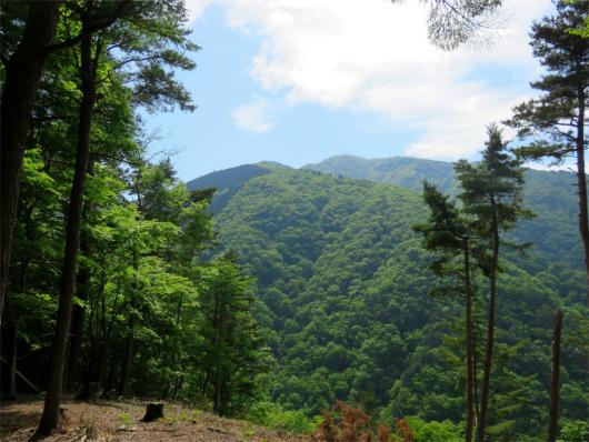 鐘撞山から大室山景色