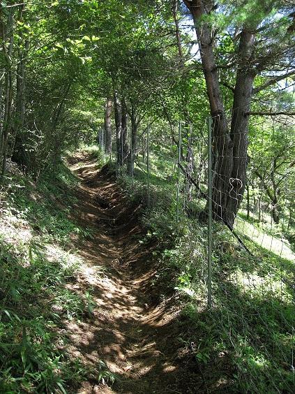 石割山登山道