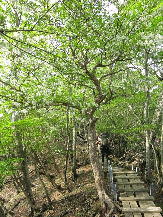 同角ノ頭から檜洞丸木道歩き