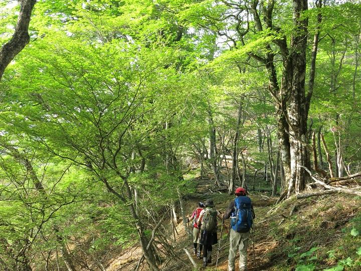 檜洞丸至福の尾根道歩き