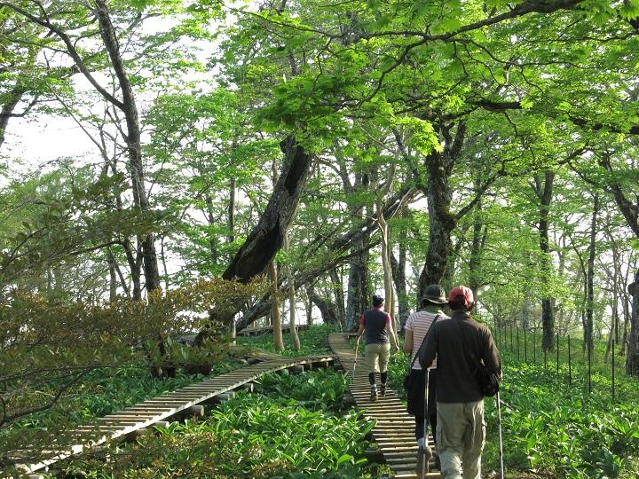 フラットな木道歩き