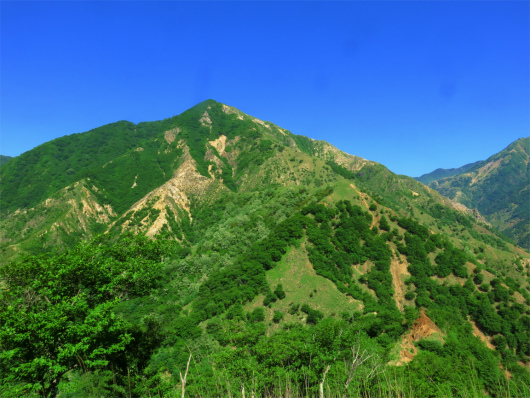 中倉山全景