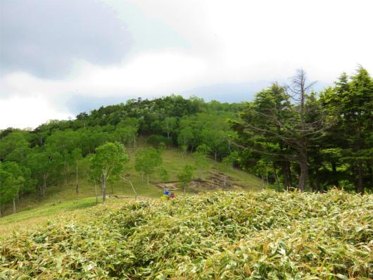 オロ山周辺藪