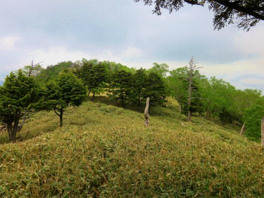 庚申山周辺も藪が深く
