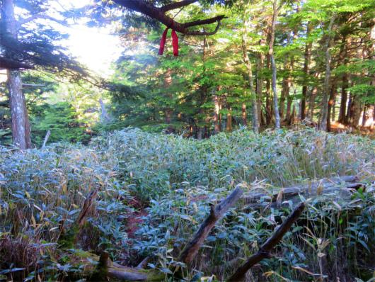 御岳山から鋸山は藪道ルート