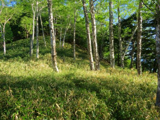 笹藪が濃く