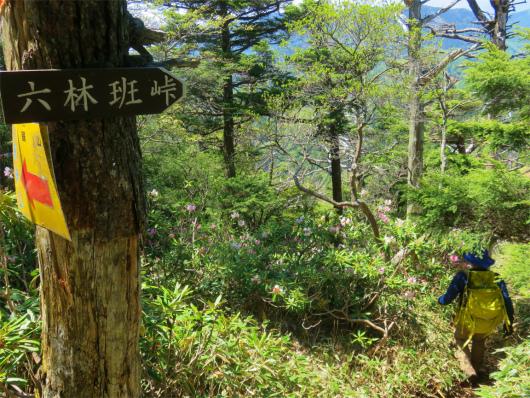 六林班峠藪道