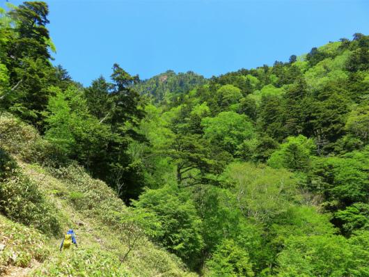 歩き難い笹藪