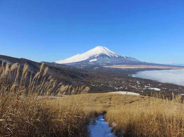 富士山とススキの景色