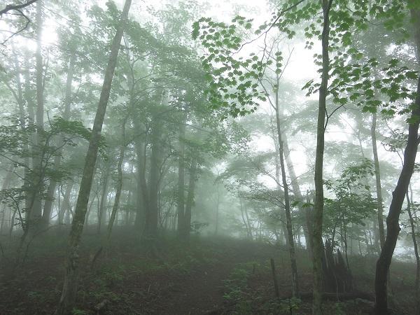 ハマイバ丸登山道凄いガス