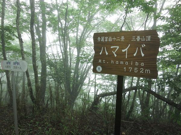 ハマイバ丸山頂
