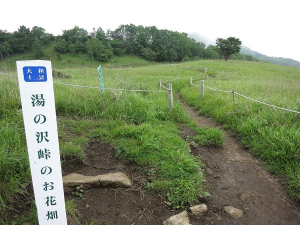 お花畑湯ノ沢峠景色