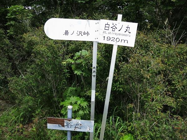 白谷ノ丸山頂
