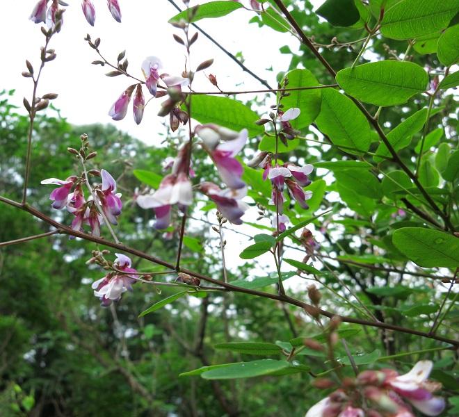 岩殿山登山口紫色花