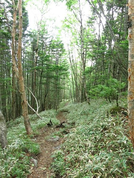 樹林帯歩き