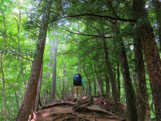 徳ちゃん新道樹林帯