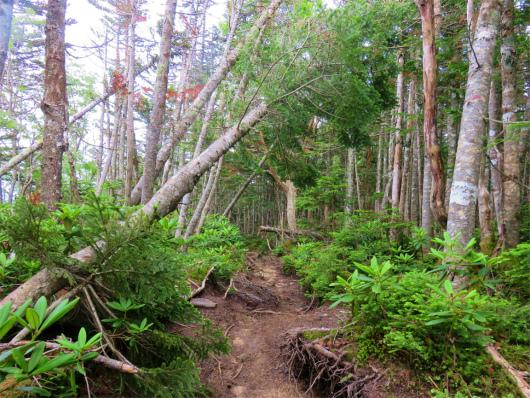 木賊山登山道