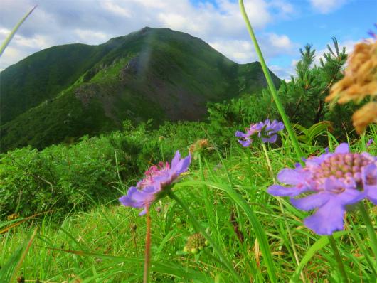 上河内岳周辺お花畑