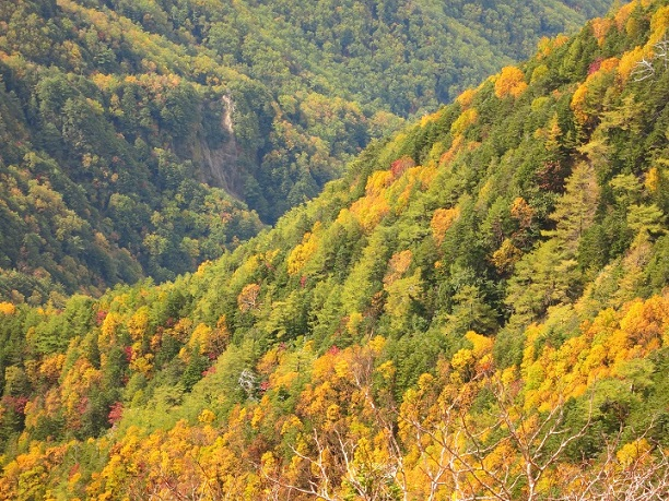 椹島ロッジ周辺の紅葉
