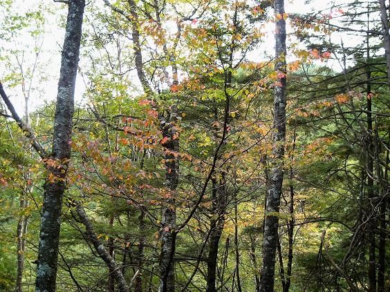 大菩薩嶺周辺の紅葉