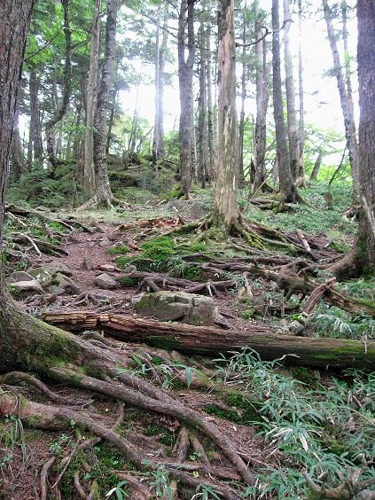 熊沢山まで結構な急登