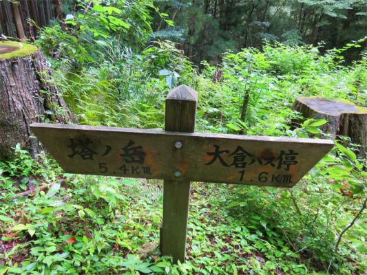 大倉バス停から観音茶屋までの距離は、約1.6km