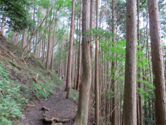 大倉高原山の家分岐から先