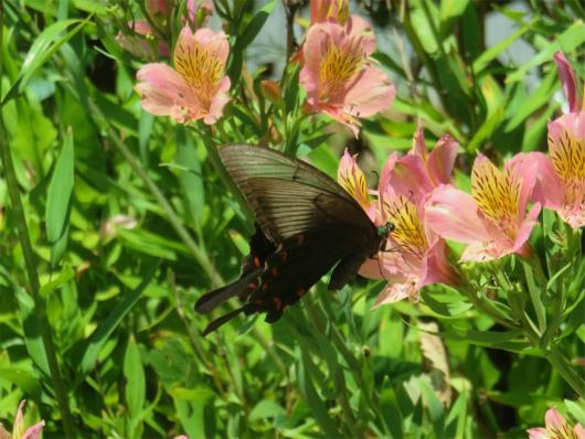 お墓にいた蝶々