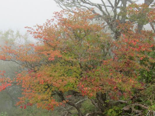 檜洞丸の山頂周辺の紅葉