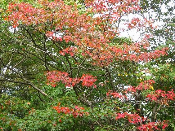 川苔山紅葉