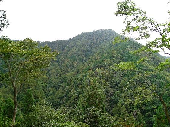 綺麗な山容をした川苔山