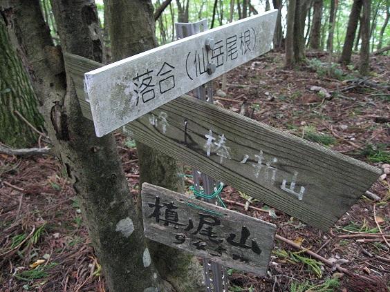 槙尾山(標高945m)n