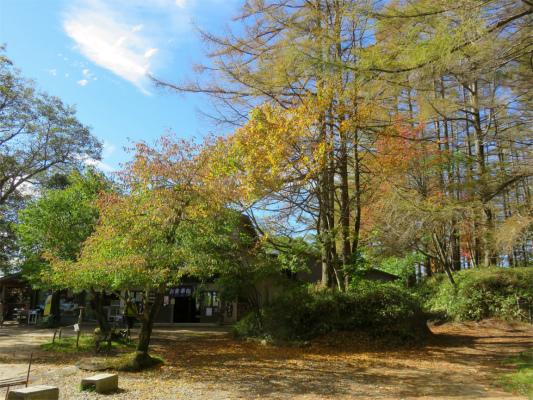 福ちゃん荘周辺の紅葉の様子