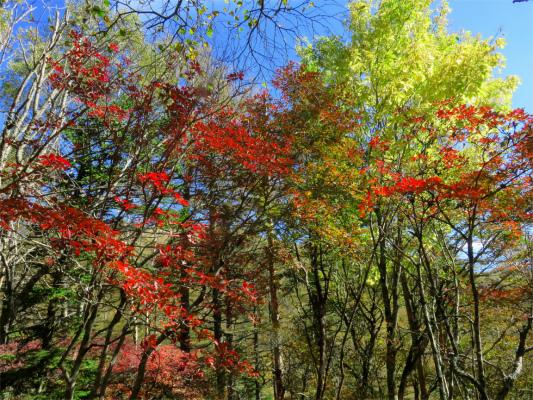 大菩薩嶺へ登るにつれて紅葉が綺麗