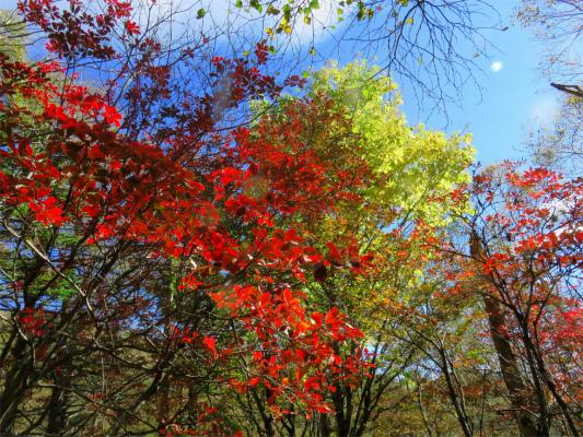 大菩薩嶺の紅葉は、標高1,800mより上が見頃