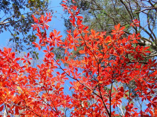 雷岩周辺の紅葉