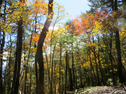 大菩薩嶺の山頂付近は樹林帯