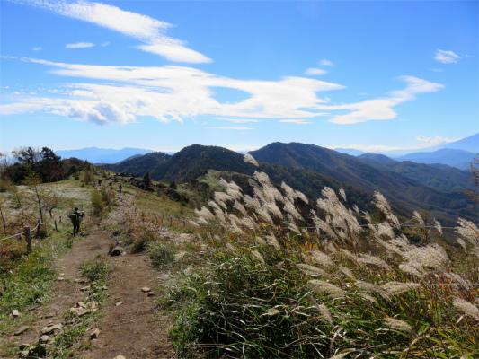 大菩薩嶺から大菩薩峠稜線のススキ