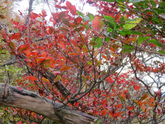 位牌岳周辺の紅葉