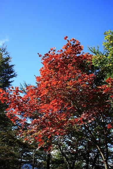 紅葉がとても綺麗
