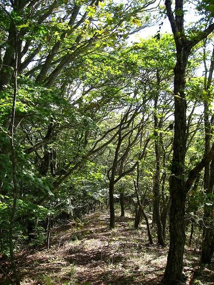 ポッコノ頭周辺美しい森