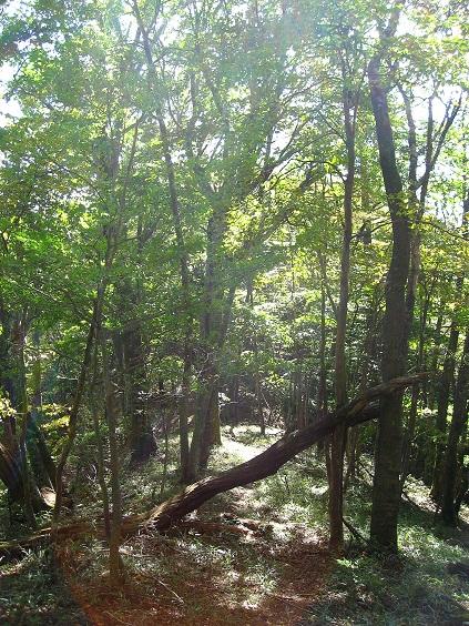 マイルドな感じの森